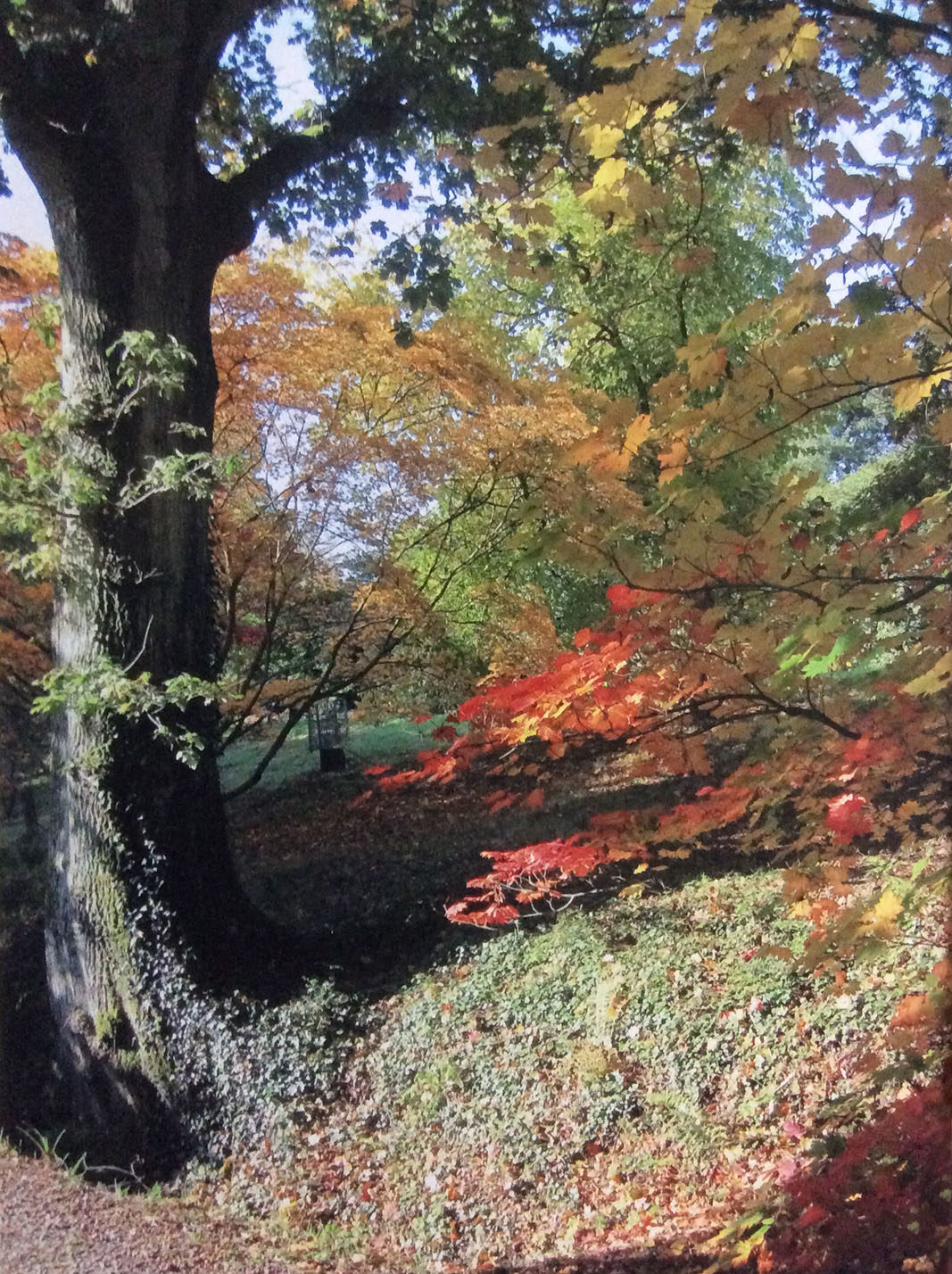 Autumn at Hilliers Arboretum - Janet Matthews