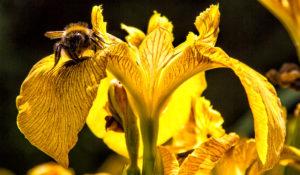 Busy Bee - Malcolm Balmer