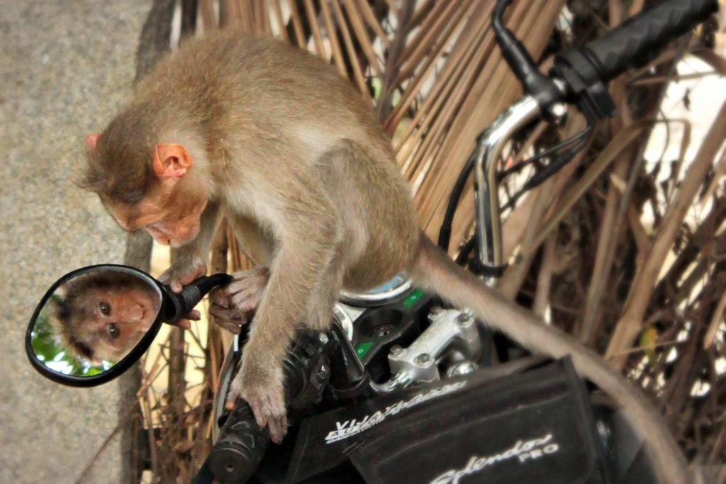 Vain Monkey - Fo Bugler