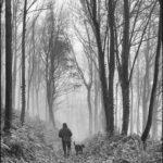 Misty Walk