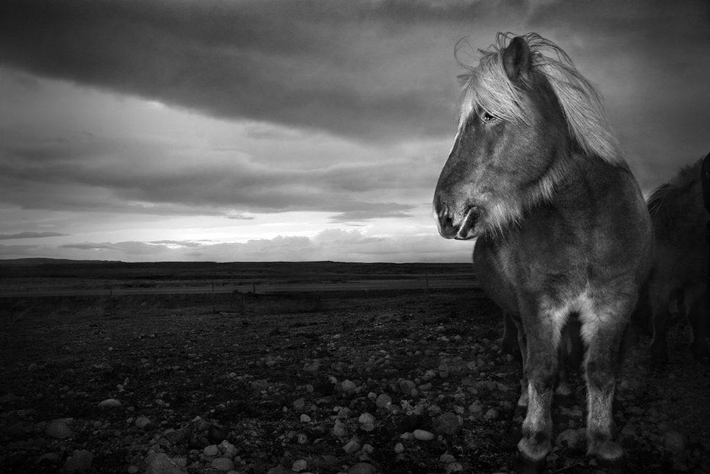 Viking Steed - Jay Warnes