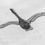 Stainless Goose - Trevor Austin