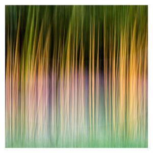 Bamboo - Malcolm Balmer