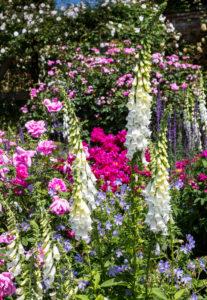 Mottisfont Abbey garden - Malcolm Balmer