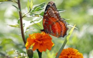 Bhutan - Chris Dowding