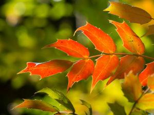 Autumn Colours, Kingston Lacy