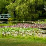Bennetts Water Gardens - Roger