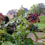 Autumn Berries, Mapperton House-Chris D