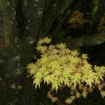 Autumn leaves, Mapperton House-Chris D