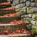 Leafy Steps-Malcom
