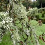 Lichen, Mapperton House-Chris D