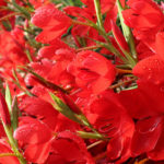 Red Bouquet-Chris Dowding