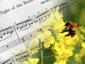 The Flight of the Bumblebee-Chris Dowding