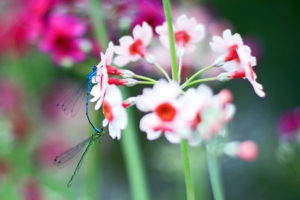 Damsel Flies-Mike Nicholls