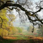 Hardy Landscape in Sherborne-Fo