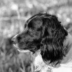 David H - My Dog