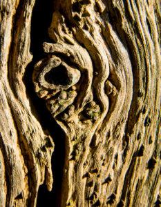Wood - Roger Gibson