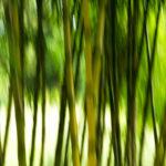 Roger - Bamboo Slide