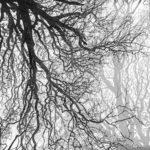 Sarah - Tree