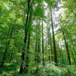 David H - Wiltshire Woods