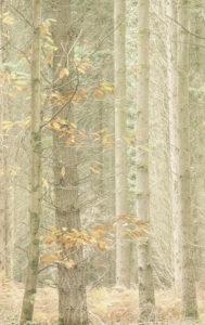A Paler Shade of Autumn