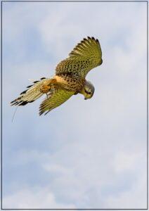 Flying High2