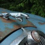 Chris E - Jaguar Leaper