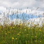 Pam - Summer Grasses