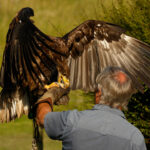 Bald Eagle-2 Mary Braddock
