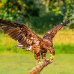 Birds in Flight-2 Michael Herrmann