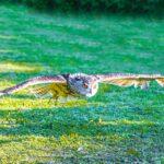 Birds in Flight - Michael Herrmann